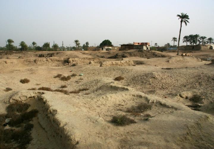 Lion Tracks Photo Qna The Land Of Goshen In Egypt Pithom Avaris